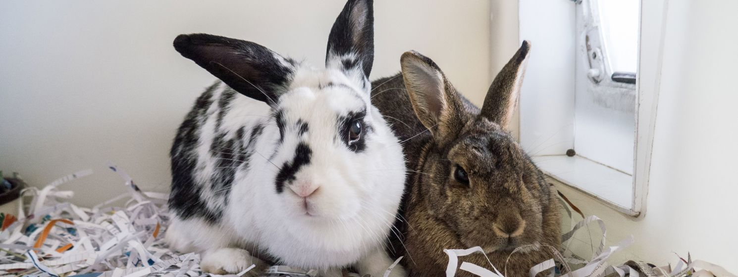 rabbits-and-smalls-for-adoption