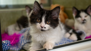 Could You Help During Kitten Season?